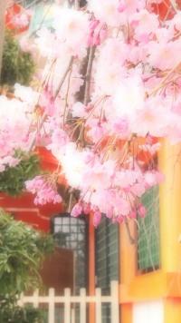 しだれ桜のほか、木蓮、椿、お花も楽しめる中島惣社。
