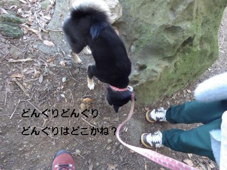 IMGP0446.jpg