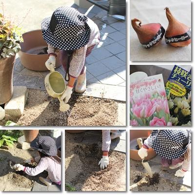 チューリップを植える1