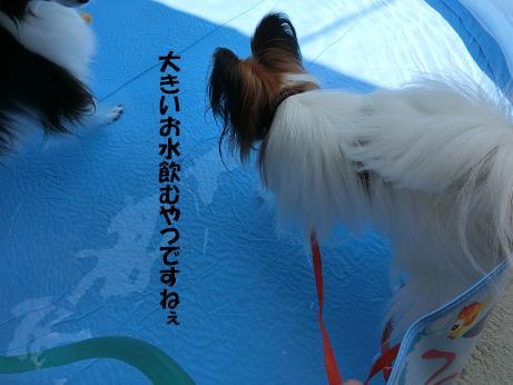 ももさくら ワンちゃんの広場7月24日 028B