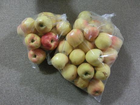 ももさくら 10月15日リンゴ狩り 023A