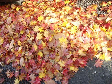 敷地の落ち葉