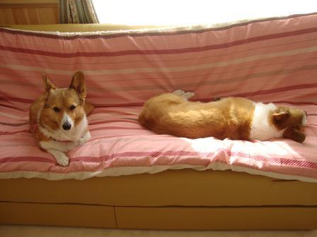 ソファーで紋兄と杏