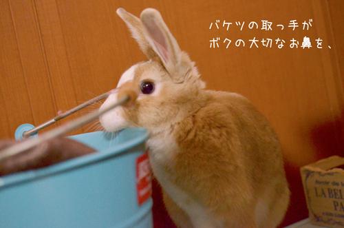 z_DSC7146.jpg