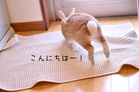 z_DSC9386.jpg