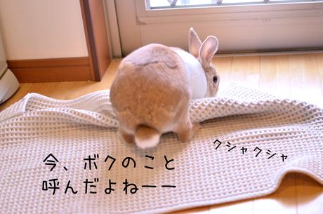 z_DSC9387.jpg
