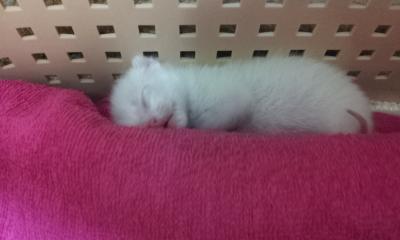 寝てるぴー