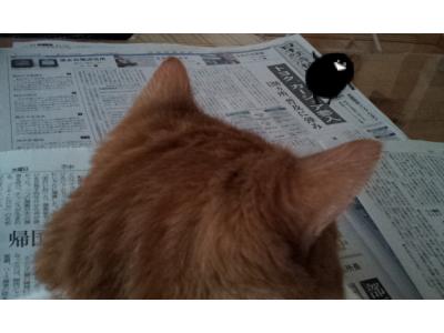 新聞チェック