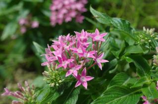 大温室内の花