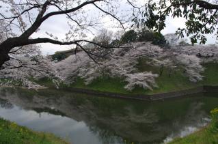 桜の名所といえばココ