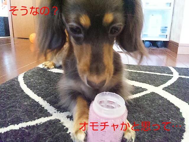 20120627_091529.jpg