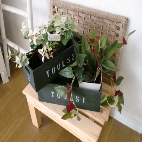 観葉植物480