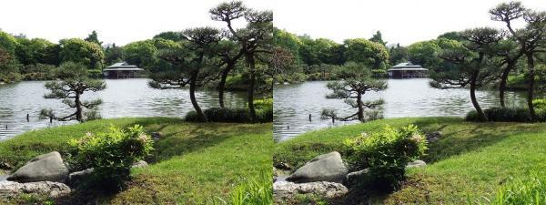 清澄庭園⑤(平行法)