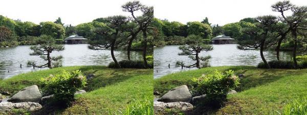 清澄庭園⑤(交差法)