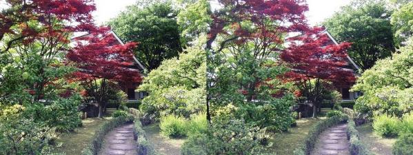 清澄庭園④(平行法)