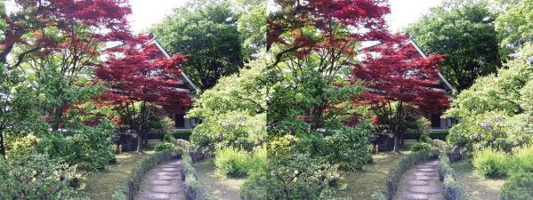 清澄庭園④(交差法)