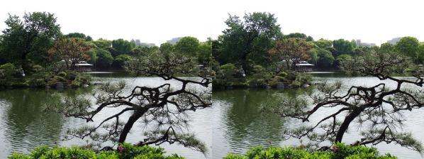 清澄庭園⑦(平行法)