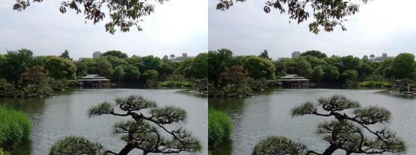 清澄庭園⑥(交差法)