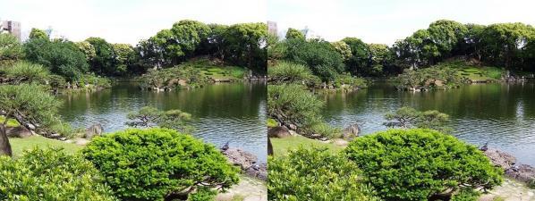 清澄庭園②(交差法)