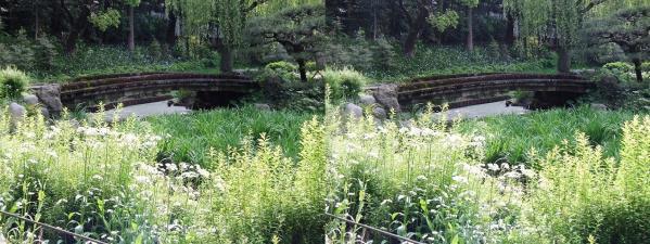 清澄庭園⑩(平行法)