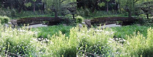 清澄庭園⑩(交差法)