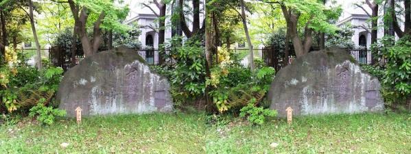 清澄庭園⑨(平行法)