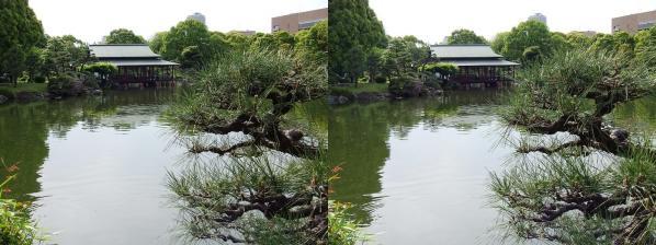 清澄庭園⑧(平行法)