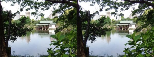 清澄庭園⑫(平行法)