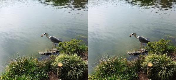 清澄庭園の生体②(交差法)