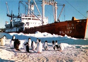 宗谷と南極のペンギン