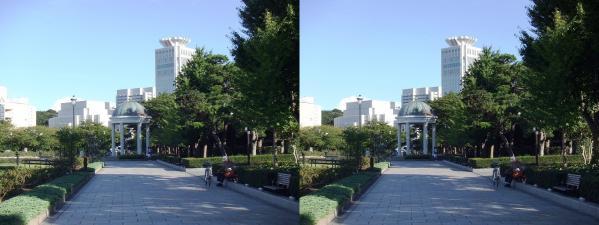 横須賀ヴェルーニ公園⑥(交差法)
