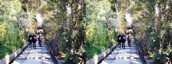 高台寺 台所坂(平行法)