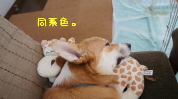 5いい夢見ろよ!