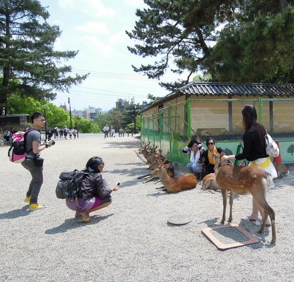 08-Nara- 08
