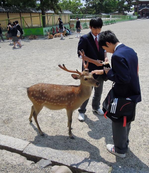 08-Nara- 17
