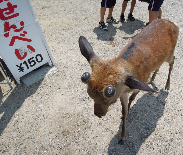 08-Nara- 14