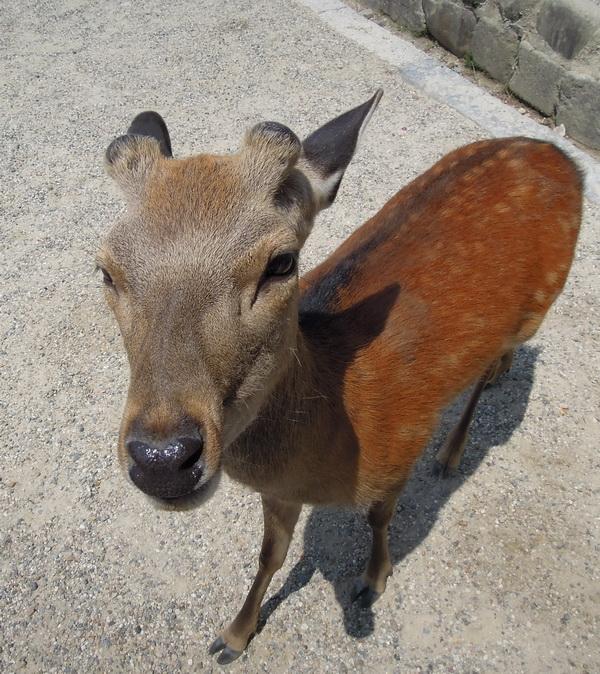 08-Nara- 15