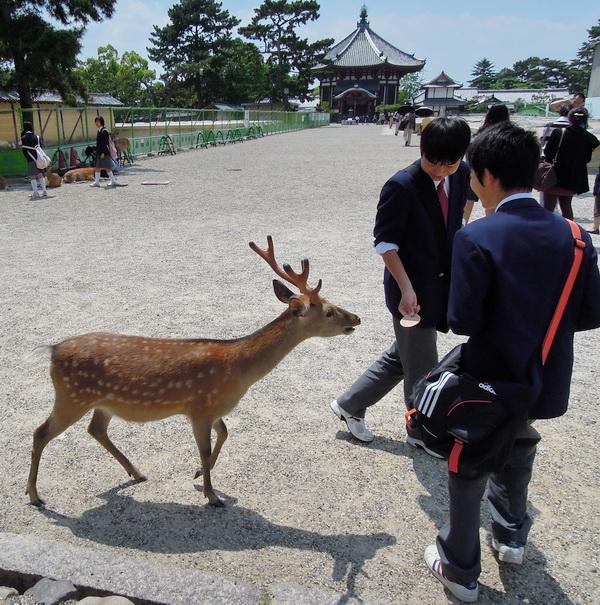 08-Nara- 18