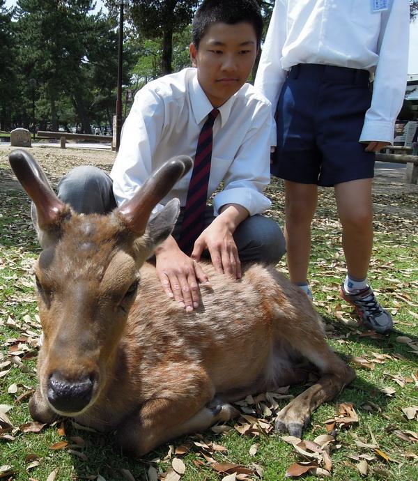 07-Nara- 03