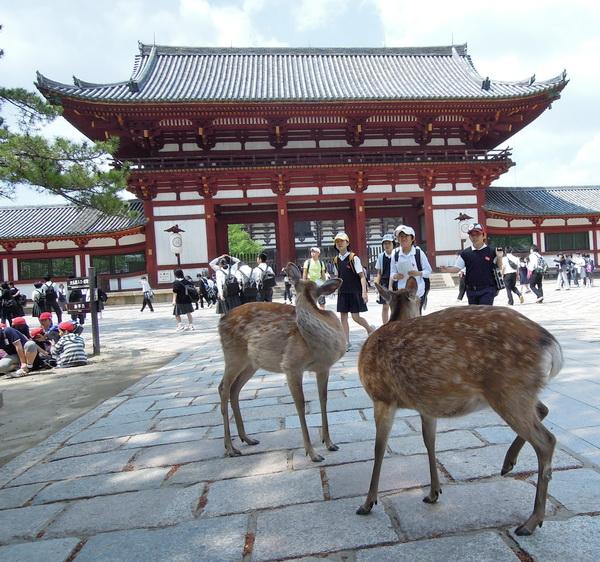 07-Nara- 14