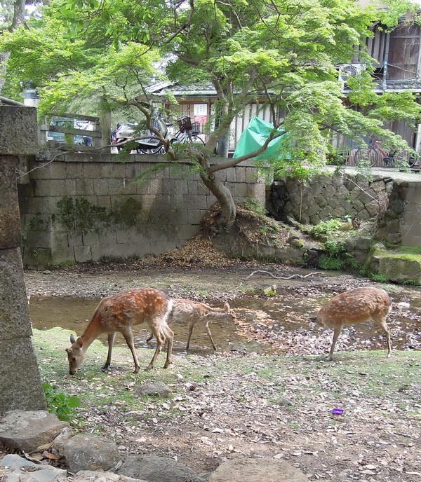 05-Nara- 02