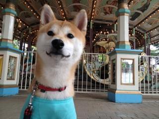 merry-go-round 1