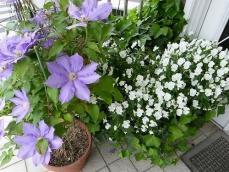 【カフェキッチンOZ】入り口の綺麗なお花