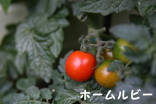 20120617_02.jpg