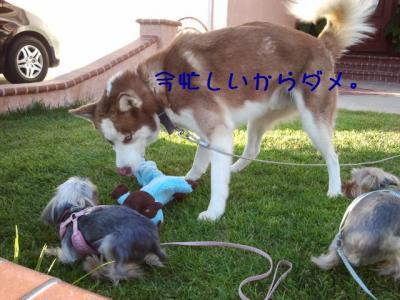 musaku20120801003