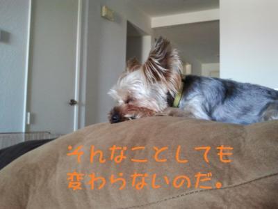 musaku20120806002
