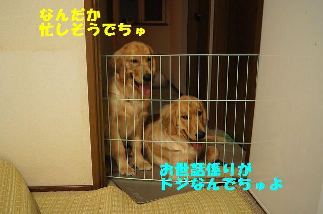 000008_20120425202141.jpg