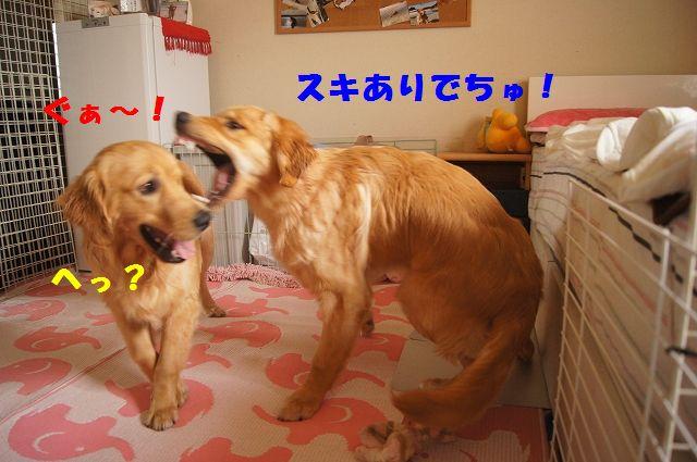 000010_20120619161544.jpg