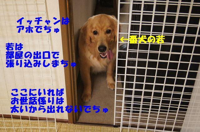 0002_20120616203815.jpg