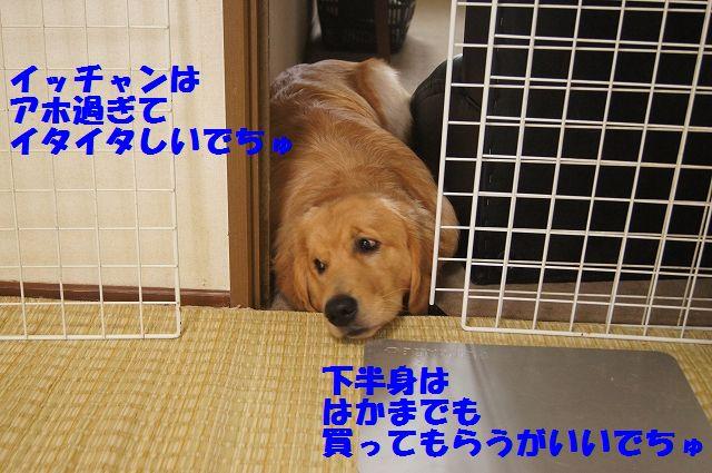 0005_20120616203812.jpg